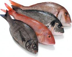 «Фиш-хаус на Гривцова»: для любителей рыбы