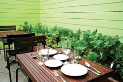 Выращивание собственных овощей и специй становится новым трендом в ресторанном бизнесе