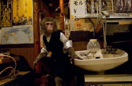 Необычный ресторан с официантами–обезьянами
